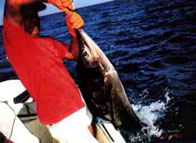 Sport Fishing at Tree Tops Bed and Breakfast, Costa Rica