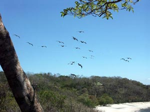 Pelicans fly over white sand beach at Tree Tops Bed and Breakfast